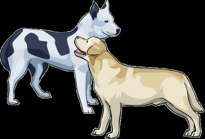 2 dogs